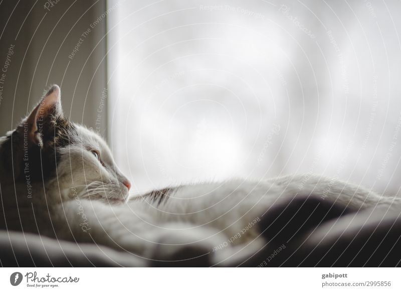 Cat is lying at the window Animal Pet Relaxation Sleep Living or residing Cuddly Natural Cute Warmth Contentment Idyll Boredom Joie de vivre (Vitality)