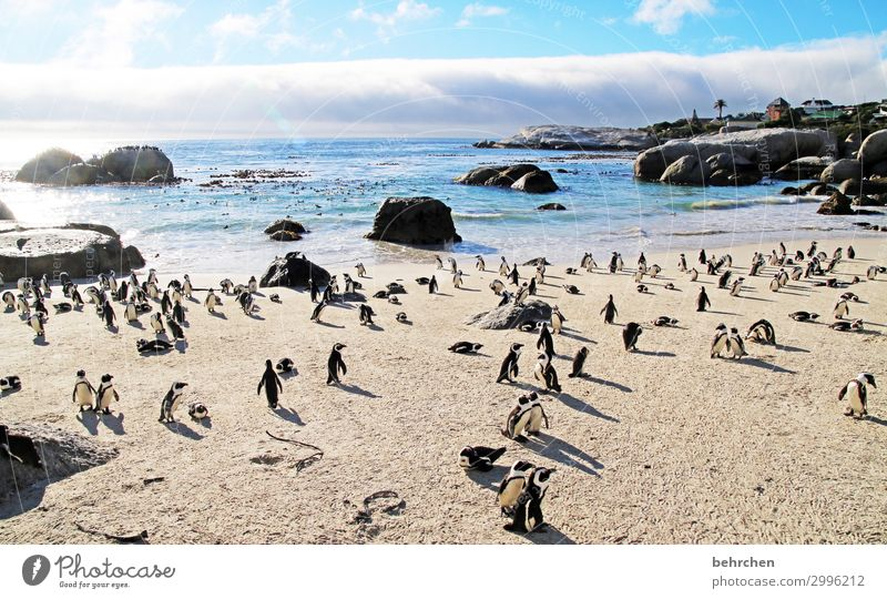 noise | penguin chatter especially To enjoy Nature Water Longing Rock Dream Sunlight Deserted Dawn Sunrise Clouds Vacation & Travel Tourism Trip Freedom
