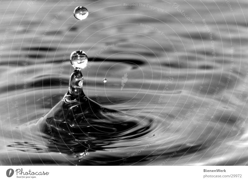 trickle Calm Waves Water Drops of water Lake Beginning Contentment Elegant Relaxation Serene Belief Religion and faith Volcanic crater Circle Treetop watercrown