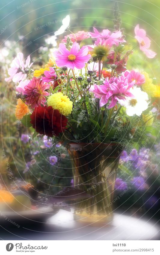 Autumn bouquet in glass vase Plant Beautiful weather Flower Leaf Blossom Garden Blue Yellow Green Orange Pink Red White Bouquet Aster Dahlia Cosmos Vase Bowl