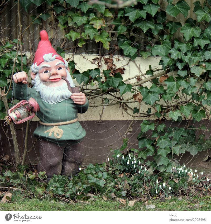 Garden gnome with lantern and pipe stands in front of a garden house overgrown with ivy Environment Nature Plant Spring Grass Ivy Leaf Blossom Snowdrop
