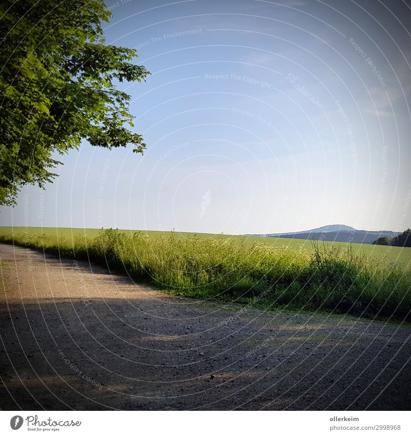 """the """"little"""" Pöhlberg Environment Nature Landscape Sky Cloudless sky Summer Weather Beautiful weather Plant Tree Grass Foliage plant Meadow Field Hill"""