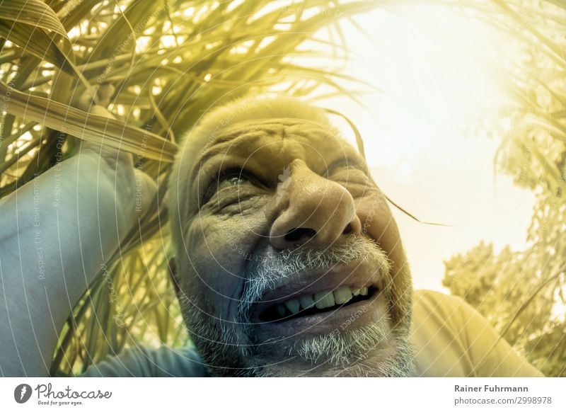 An elderly man seeks shade among plants in hot summer weather. Human being Man Adults Male senior Head 1 Environment Nature Plant Cloudless sky Sun Sunlight