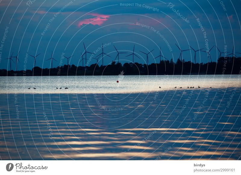 Wind power plants - on the upwind Wind energy plant Water Sky Climate change Lake Rotate Authentic Dark Sustainability Blue Pink Black White Responsibility