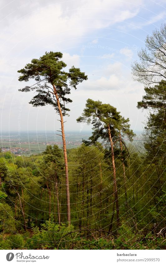 In the Palatinate Vacation & Travel Trip Hiking Nature Landscape Plant Elements Sky Clouds Tree Forest Palatinate forest Rhineland-Palatinate Village Small Town
