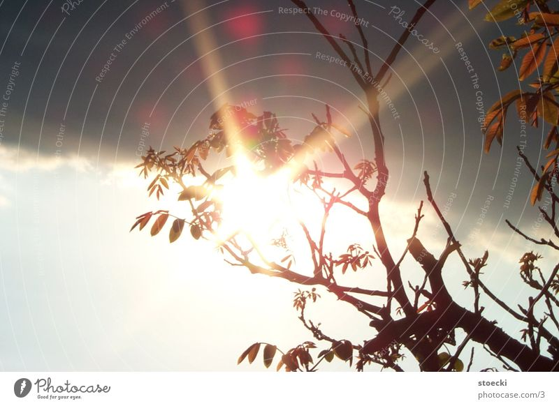 Nature Tree Sun Leaf Clouds