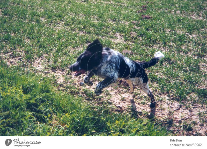 Hunter on the road Spring Dog Jump Green In transit Leisure and hobbies Playing Movement Freedom Exterior shot