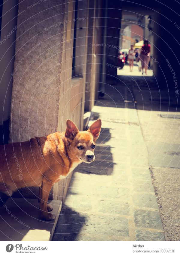 doormen Living or residing Human being Beautiful weather Old town Populated House (Residential Structure) Alley Footpath Dog 1 Animal Observe Going Looking