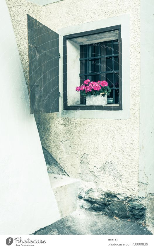 In one corner of the building is a small, barred window. With flowers as decoration. Window Building latticed Masonry ancient Rustic Shutter Corner Flower box