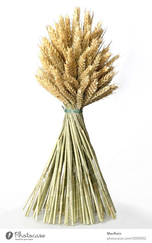 sheaves Grain Summer Thanksgiving Agriculture Forestry Nature Plant Quality Gersten Grain harvest Harvest Rye Seed Dry Bond Bound Colour photo Interior shot