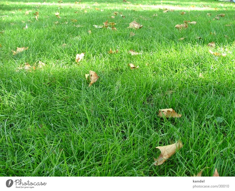 Five before autumn Grass Autumn Juicy Green Brown Light Meadow Leaf Lawn Shadow Nature