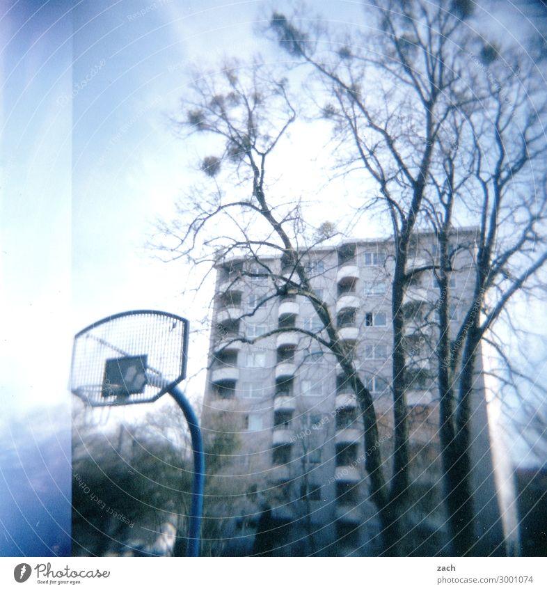 bonjour tristesse Playing Sports Fitness Sports Training Ball sports Basketball Sporting Complex Basketball basket Basketball arena Tree Kassel Village