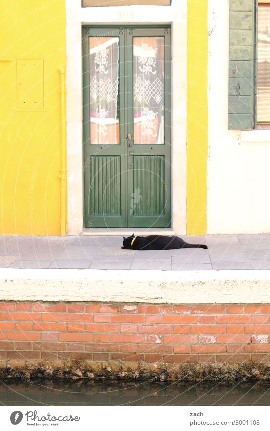 yellow | green Living or residing House (Residential Structure) Venice Burano Italy Fishing village Old town Wall (barrier) Wall (building) Facade Window Door