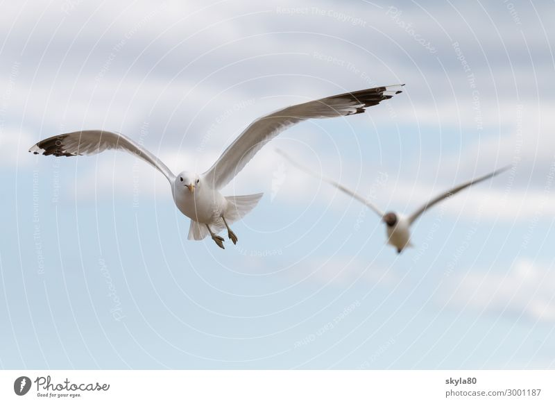 Sky Clouds Animal Bird Flying Air Wild animal Group of animals Wing Curiosity Infinity Love of animals