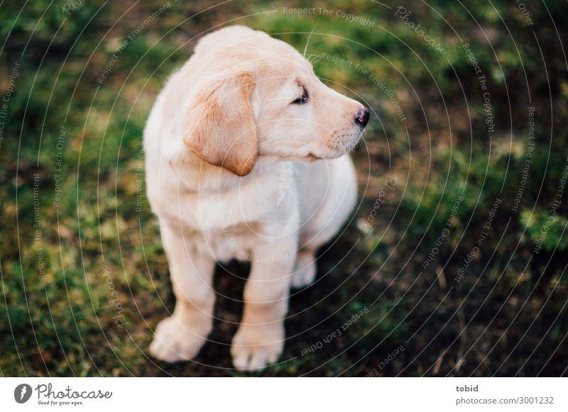 Dog Animal Baby animal Meadow Sit Observe Pet Pelt Animal face Puppy