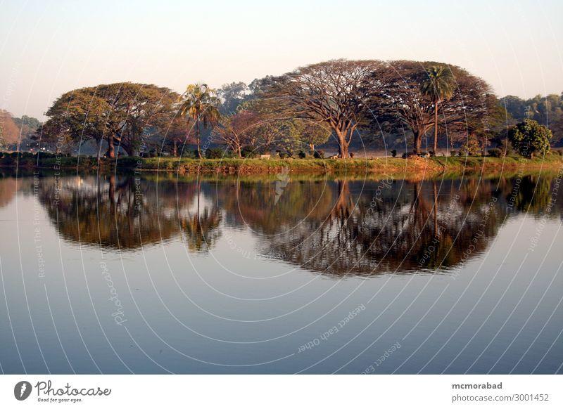Mirror Image in Morning Light Blue Beautiful Green Tree Lake Horizon Esthetic Island Serene Pond Peaceful Horizontal