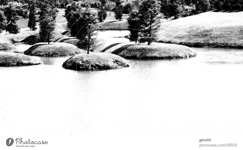 Black & White Nature 4 Tree Hill Grass Gray Lake Lawn sword Garden Japan Water Island