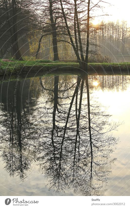 Airy, mirrored. Environment Nature Landscape Water Autumn Weather Tree Pond Lake Shore of a pond Body of water Lakeside Natural Beautiful Brown Yellow Moody