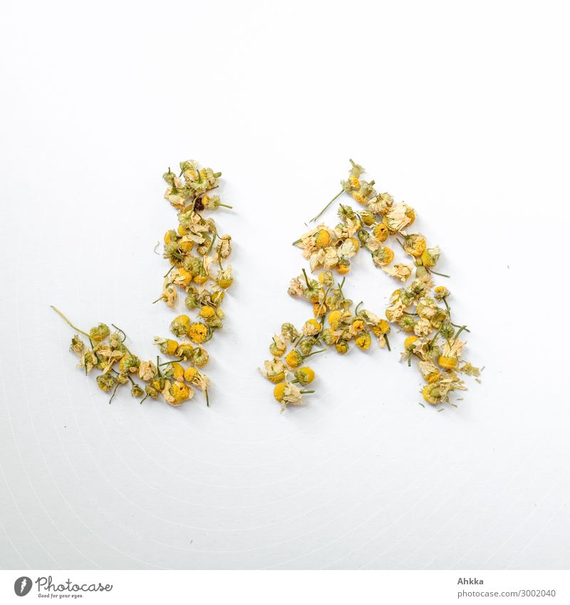 yes Blossom Camomile blossom Telescope Characters Beautiful Positive Yellow White Joy Happy Optimism Agreed Sympathy Friendship Together Love Infatuation