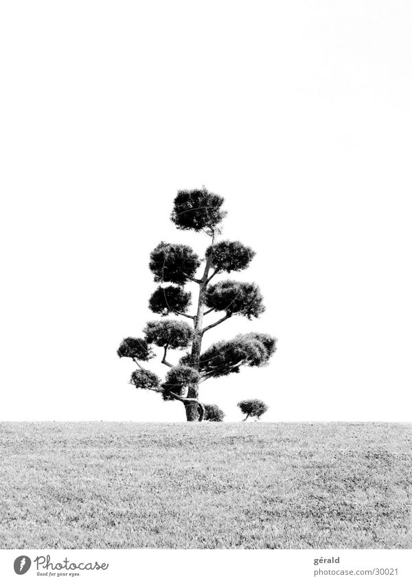 Black & White Nature 2 Tree Hill Grass Gray Lawn sword Garden Japan