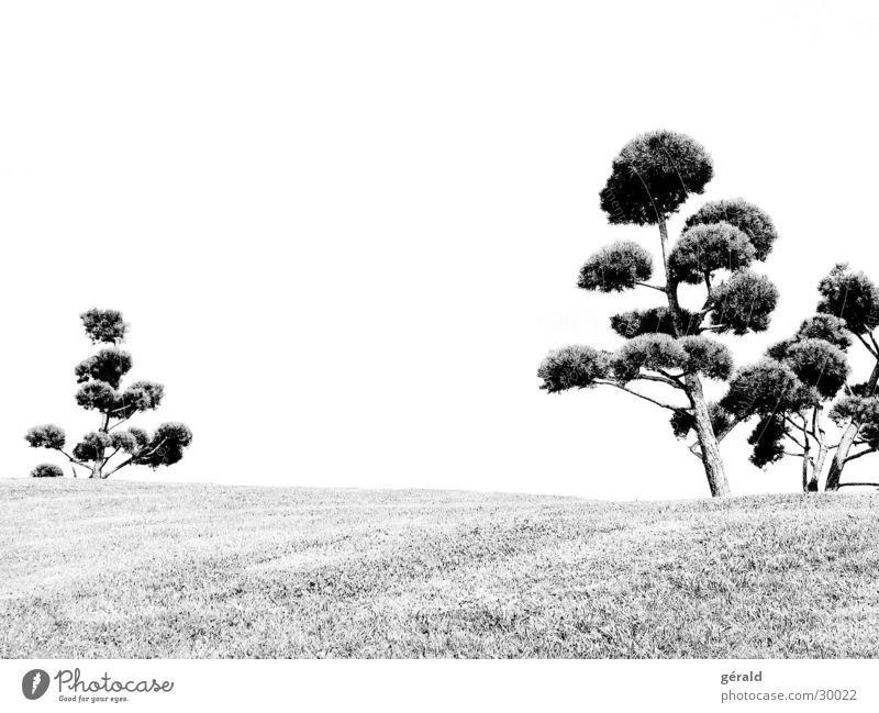 Black & White natural 1 Tree Hill Grass Gray Lawn sword Garden Japan