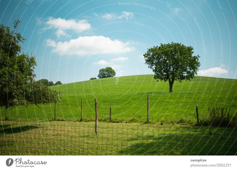 Willow, trees, fields, blue sky & clouds Food Lifestyle Healthy Relaxation Vacation & Travel Tourism Summer Summer vacation Agriculture Forestry Environment
