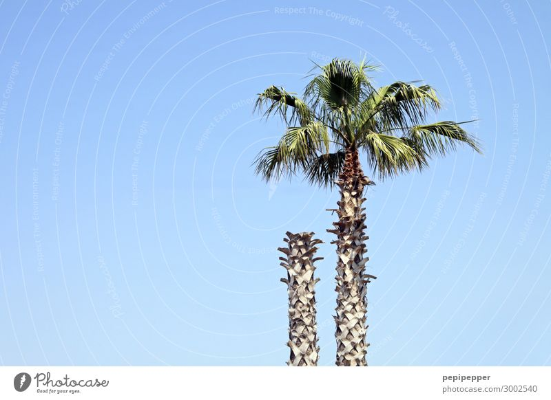 headless Vacation & Travel Trip Summer Summer vacation Sky Cloudless sky Plant Tree Leaf Palm tree Wood Blue Colour photo Exterior shot Day Panorama (View)