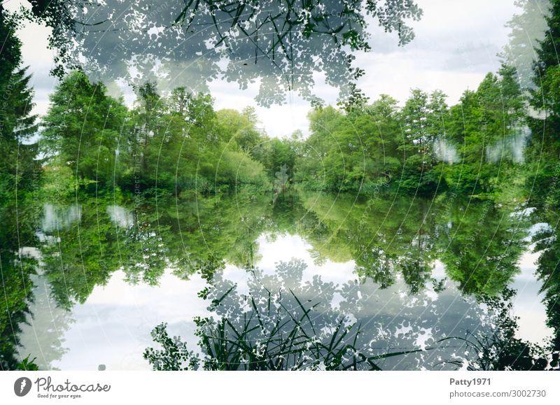 Sea (len) mirror Environment Nature Landscape Plant Tree Forest Lakeside Natural Green White Calm Contentment Mysterious Surrealism Symmetry Double exposure