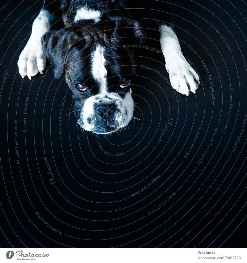 Dog White Animal Black Life Stone Cute Observe Pet Trust Enthusiasm
