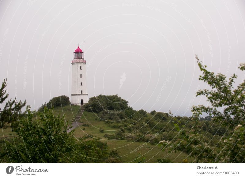 Isolation in an ivory tower Island Nature Landscape Summer Hill Coast Baltic Sea Hiddensee Tower Lighthouse Tourist Attraction Lighthouse Dornbusch/Hiddensee