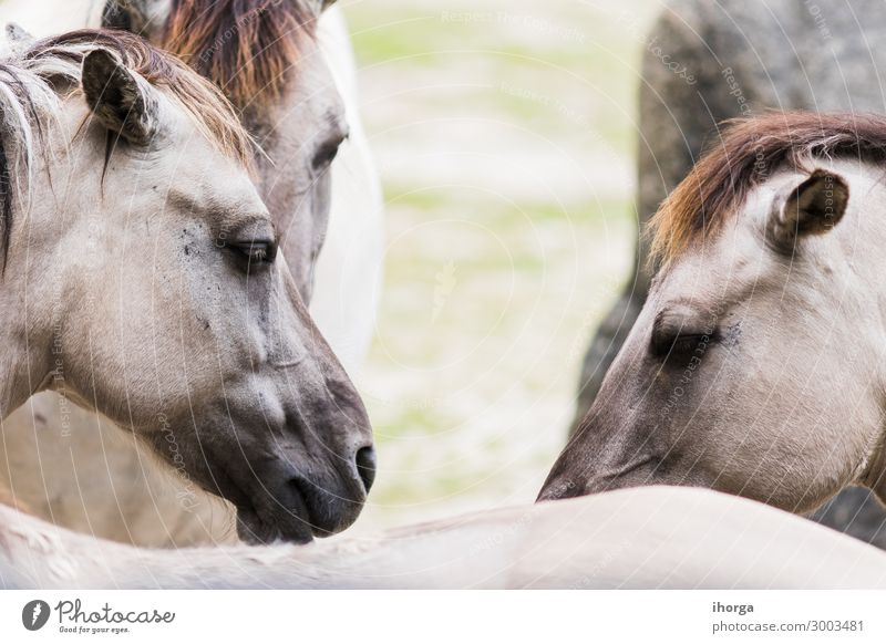 Portrait of horse tarpan on the outside Beautiful Life Vacation & Travel Nature Landscape Animal Park Fur coat Wild animal Horse Animal face Group of animals