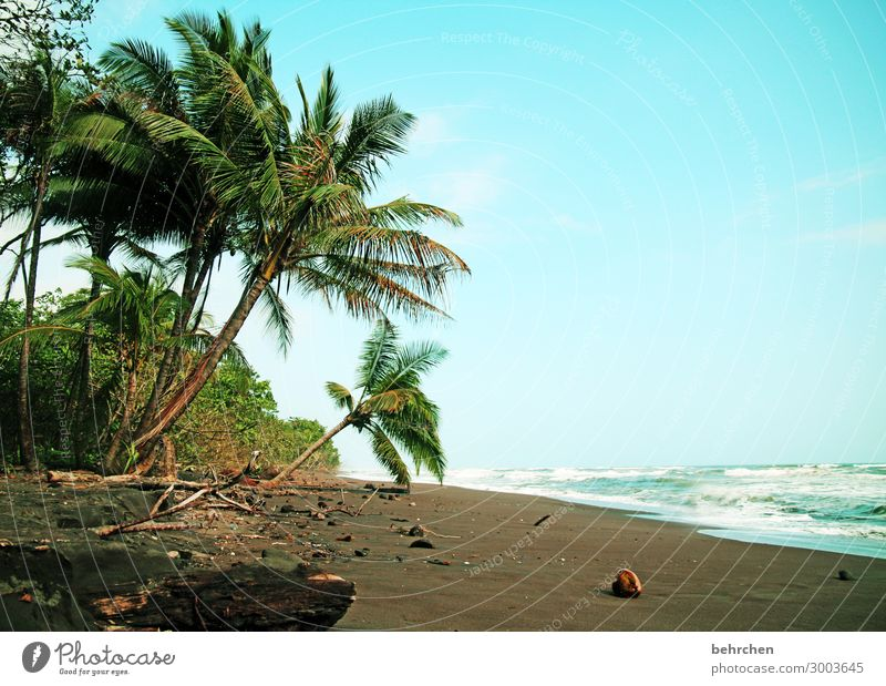 favourite beach Vacation & Travel Tourism Trip Adventure Far-off places Freedom Nature Landscape Sky Tree Exotic Palm tree Coconut Waves Coast Beach Ocean