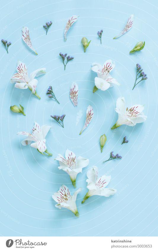 Flowers on a light blue background Design Decoration Wedding Woman Adults Mother Above White Creativity romantic Light blue flat lay alstromeria gypsophila