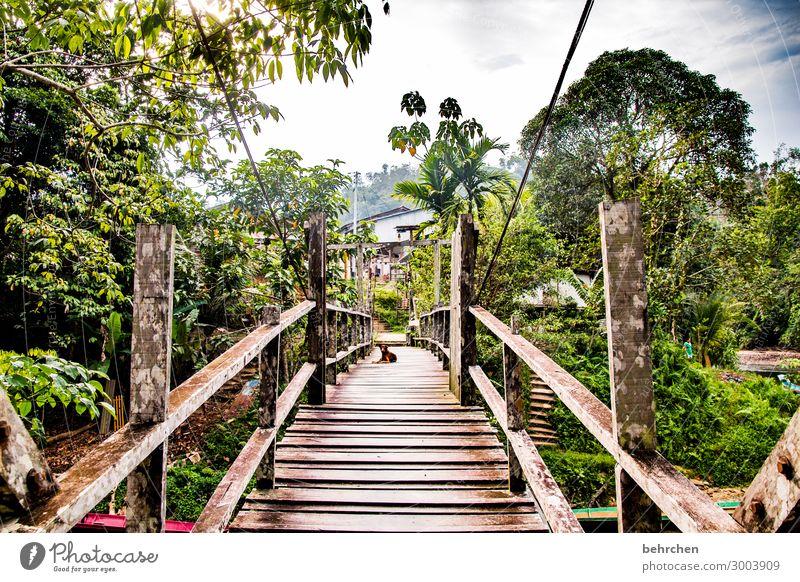 build bridges... Vacation & Travel Tourism Trip Adventure Far-off places Freedom Nature Landscape Sky Clouds Virgin forest River bank Exceptional Exotic