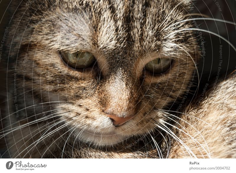 Contemplative cat. Cat Nature Beautiful Relaxation Animal Loneliness Eyes Sadness Emotions Think Moody Head Dream Lie Elegant Gloomy