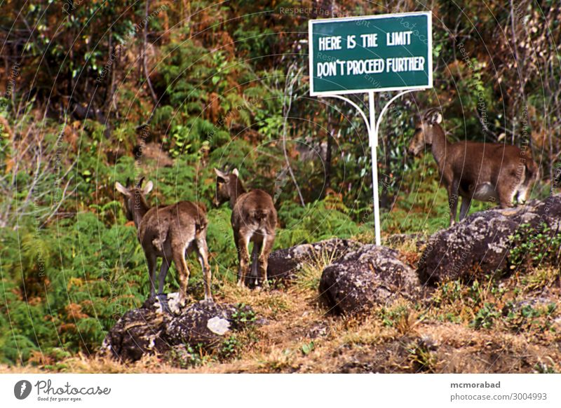 In Dilemma Animal Wild animal 2 Pair of animals Signage Warning sign Funny Tahr Rocky Mountain goat Sanctuary Refuse Safe haven Shelter asylum sign post dilemma