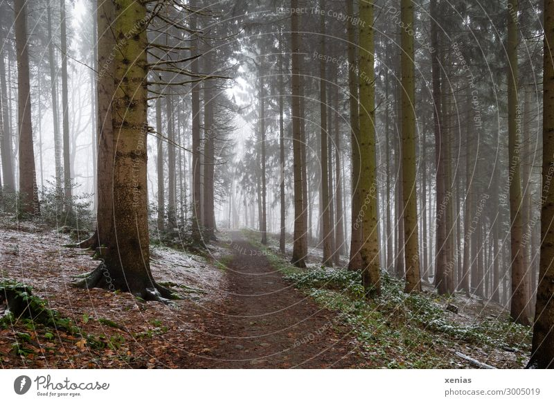 Forest path with fog and some snow Vacation & Travel Trip Adventure Winter Snow Hiking Environment Nature Autumn Climate Weather Fog Tree Fir tree Cold Brown