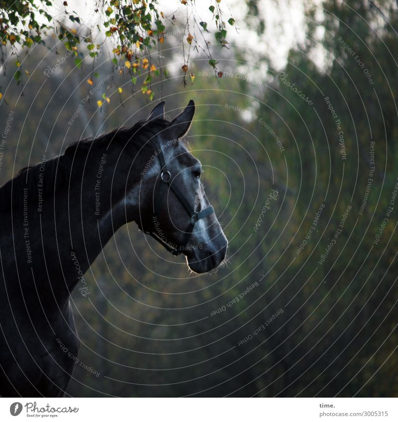 noise Environment Nature Tree Forest Animal Farm animal Horse 1 Observe Looking Dark Watchfulness Endurance Unwavering Curiosity Interest Discover Emotions