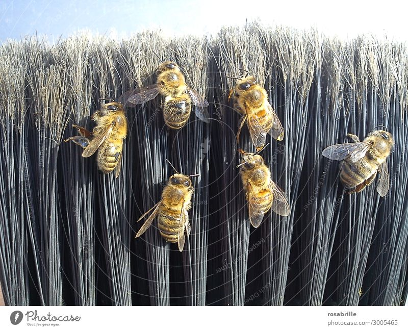 dead bees on broomsticks || || Trash! 2019 Broom Environment Nature Animal Farm animal Bee Group of animals Lie Cleaning Natural Black Orderliness Death