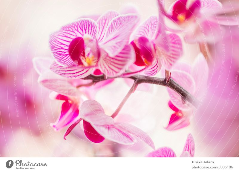 Orchids magic Wellness Harmonious Relaxation Calm Meditation Spa Feasts & Celebrations Nature Plant Spring Summer Autumn Winter Flower Blossom Orchid blossom