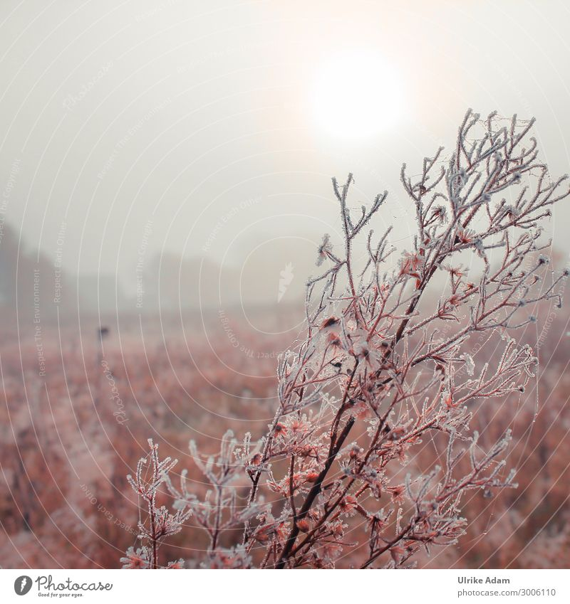 Nature - Winter Morning Environment Landscape Plant Drops of water Autumn Fog Ice Frost Field Bog Marsh Soft Romance Sadness Grief Calm mourning card Haze