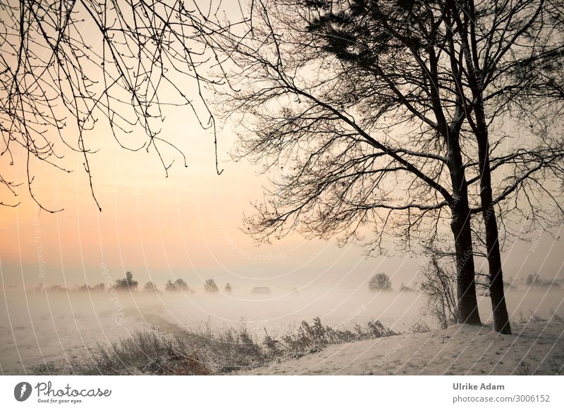 Winter in the Devil's Moor Wellness Wallpaper mourning card Nature Landscape Sunrise Sunset Beautiful weather Fog Ice Frost Snow Forest Bog Marsh Illuminate