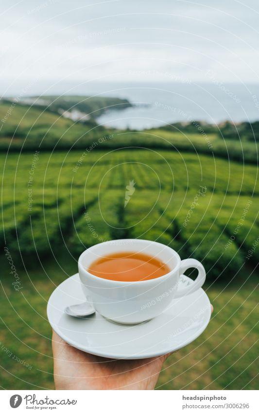 Cup of black tea in front of tea plantation and sea, São Miguel, Azores Beverage Hot drink Landscape Plant Agricultural crop Tea Tea plants Tea plantation
