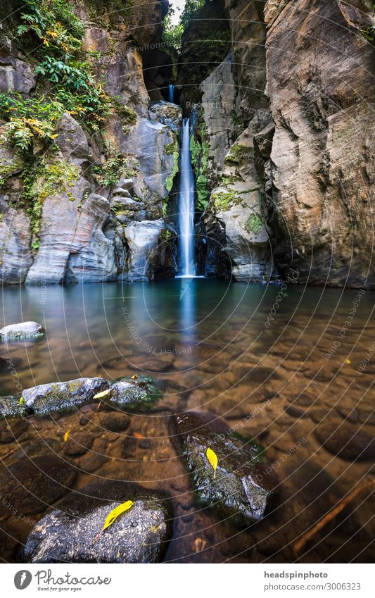 Picturesque waterfall with crystal clear water & foliage, Azores Environment Nature Landscape Plant Elements Water Summer Autumn Virgin forest Rock Canyon