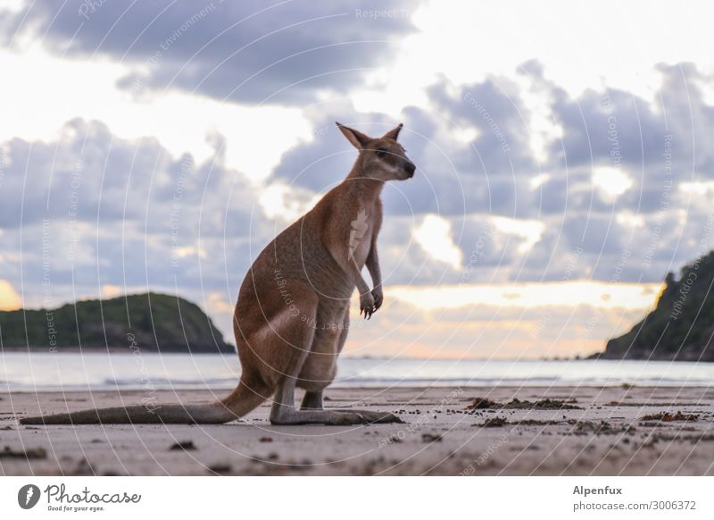Wanna be a Wallaby Australia Animal Wild animal wallaby Kangaroo Sit Exotic Acceptance Trust Safety (feeling of) Sympathy Friendship Love of animals Adventure