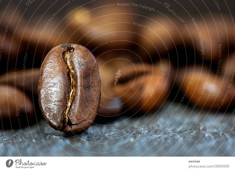 Macro shot: One coffee bean standing upright Coffee bean Food To have a coffee Organic produce Hot drink Latte macchiato Espresso Fragrance Brown Gray Aromatic