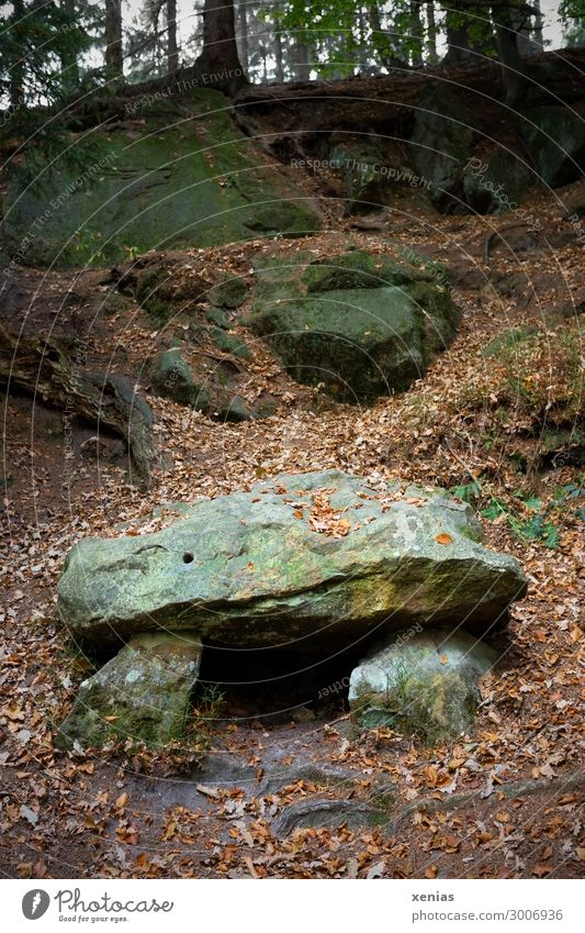 Hunebed in the forest Nature Landscape Autumn Forest Manmade structures megalithic tomb Stone Old Stone block Exterior shot Copy Space top Copy Space bottom