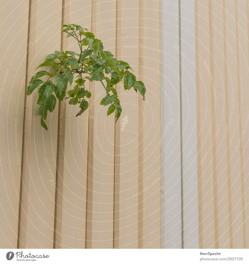 outburst Plant Bushes Foliage plant Manmade structures Wall (barrier) Wall (building) Brash Natural Rebellious Wild Green Fence Grown Furrow Border Twig