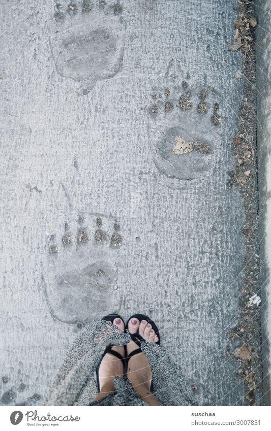 I'm following in whose footsteps. Footprint feet Imprint Bear Polar Bear Woman Flip-flops Lanes & trails succession follow sb. follow in footsteps Complain