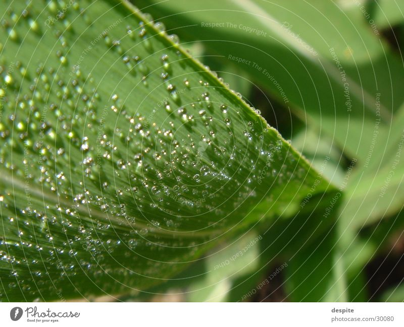 SweetLeaf Plant Green Fresh Nature Detail